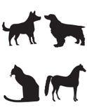 Cani gatto e cavallo Fotografia Stock Libera da Diritti
