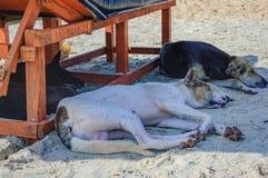 Cani indiani che dormono all'ombra della chaise-lounge del sole Fotografia Stock Libera da Diritti