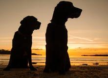 Cani nel tramonto Fotografia Stock Libera da Diritti