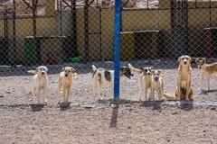 Cani protettivi dall'uccisione e dall'avvelenamento nel riparo in Aqaba, Giordania del cane immagini stock