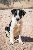 Cani protettivi dall'uccisione e dall'avvelenamento nel riparo in Aqaba, Giordania del cane immagine stock libera da diritti