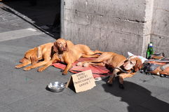 Cani a Roma Fotografie Stock