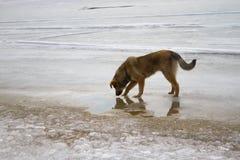 Cani senza tetto nell'orario invernale immagini stock libere da diritti