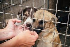 Cani senza tetto svegli nel riparo di animali Fotografie Stock