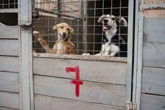 Cani senza tetto svegli nel riparo di animali Fotografia Stock