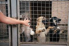 Cani senza tetto svegli nel riparo di animali Immagine Stock