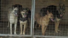 Cani senza tetto in una gabbia archivi video