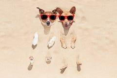 Cani sepolti in sabbia Immagine Stock
