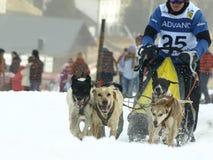 Cani, slitte e mushers in Pirena 2012 Fotografie Stock