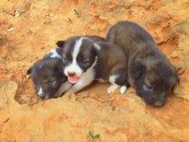 Cani smarriti che aspettano adozione immagine stock