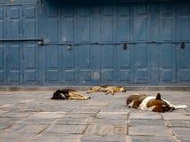 Cani sonnolenti di soggiorno fotografia stock