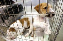 Cani in una gabbia Fotografia Stock Libera da Diritti
