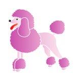 Caniche cor-de-rosa Fotos de Stock Royalty Free