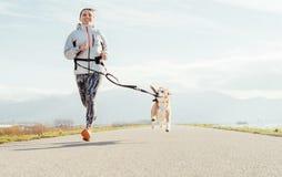 Canicross övningar Kvinnliga körningar med hans beaglehund och lyckliga le Aktivitet för utomhus- sport för höstvår royaltyfri fotografi