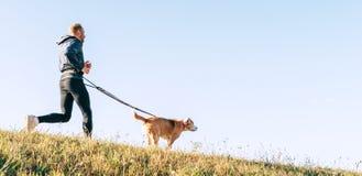 Canicross övningar Man som joggar med hans beaglehund på den soliga morgonen royaltyfria foton