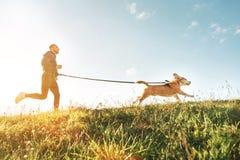 Canicross övningar Mankörningar med hans beaglehund Aktivitet för utomhus- sport med husdjuret royaltyfri bild
