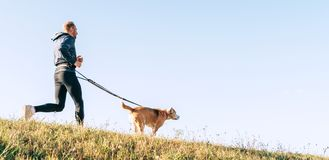 Canicross exercises. Man jogging with his beagle dog at sunny morning royalty free stock photos