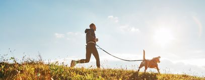 Canicross exercises. Man runs with his beagle dog at sunny morning. Healthy lifestyle concept. royalty free stock images
