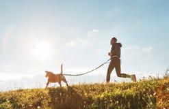 Canicross exercises. Man runs with his beagle dog at sunny morning stock photos