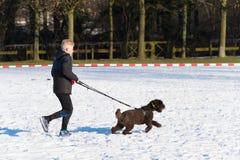 Canicross que corre en nieve Imagenes de archivo