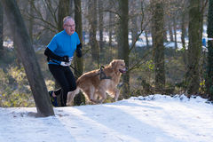 Canicross running in snow Royalty Free Stock Photo