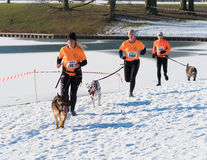 Canicross running in snow Stock Photography