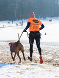 Canicross running in snow Royalty Free Stock Images