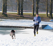 Canicross running in snow Royalty Free Stock Image
