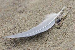 Canilla blanca en la arena Foto de archivo