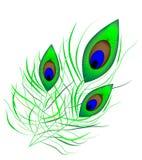 Canilla del pavo real Fotografía de archivo libre de regalías