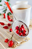 Canina rosa with ripe red berries / rose hip /  šípek / Pometu Royalty Free Stock Photos