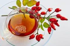 Canina rosa with ripe red berries / rose hip /  šípek / Pometu Stock Photo