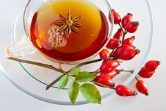 Canina rosa with ripe red berries / rose hip Pometu Stock Photography