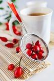 Canina Rosa z dojrzałymi czerwonymi jagodami/różany biodra/Å ¡ Ãpek, Pometu/ Zdjęcia Royalty Free