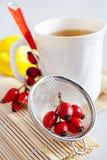 Canina Rosa z dojrzałymi czerwonymi jagodami/różany biodro, Pometu/ Obrazy Royalty Free