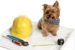 Canine Architect. A yorkshire terrier architect examining blueprints Stock Photo