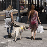 Canine Companions dog in training. Woman crossing a road training a Canine Companions Labrador dog in Ybor City Tampa Florida USA. April 2017 Stock Images