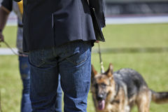 Canine contest. Canine contest of German shepherds Royalty Free Stock Image