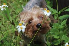 Canine curiosity Royalty Free Stock Photography