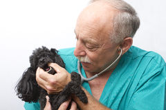 Canine Doctor and Patient Stock Image