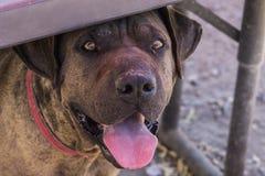 Canine enjoying the shade Royalty Free Stock Photography