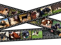Canine filmstrip illustration. Illustration of filmstrips with images of dogs Stock Image