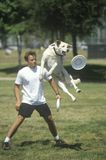 Canine Frisbee Contest, Royalty Free Stock Photos