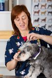 Canine hairdresser. In a beauty clinic with dog Stock Photo