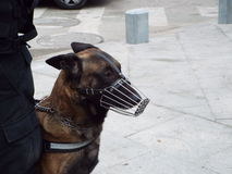Canine patrol Bucharest. Stock Photos