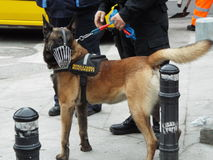 Canine patrol Bucharest. Stock Image