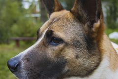 Canine profile on a forest background. Live color without processing royalty free stock image