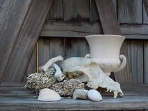 Canine skull with coquina & shells still life. This canine skull is set with coquina and three types of shells and a porcelain cup against a background of grey stock image