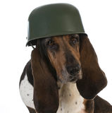 Canine soldier Stock Photos
