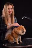 Canine styling Stock Image